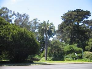 San Francisco 002