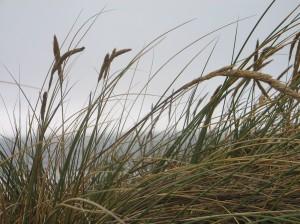 Ocean Beach 15